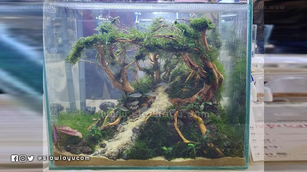aquascape bonsai